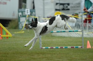 NADAC Agility Trial - Stowe, VT August 2005