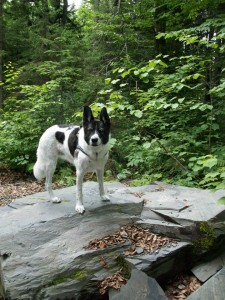 July 2012 - I helped her up on this rock although she WOULD try to jump up there!