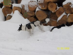 squirrel hunting!