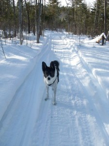 LOVE our winter trails...